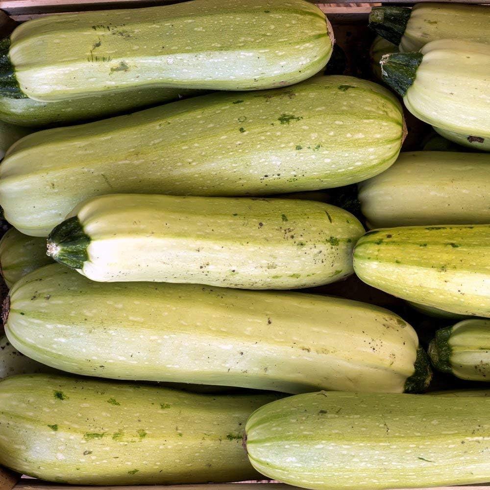 Semillas de calabaza Zloty Cepelin - Cucurbita pepo - 16 semillas
