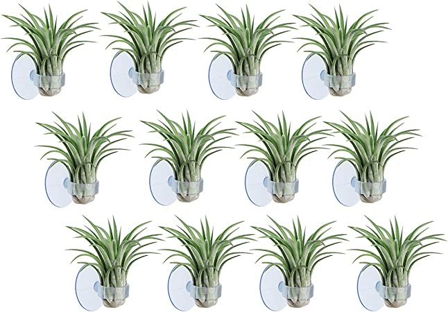 4-colorful airplant holder without plants,USA free ship