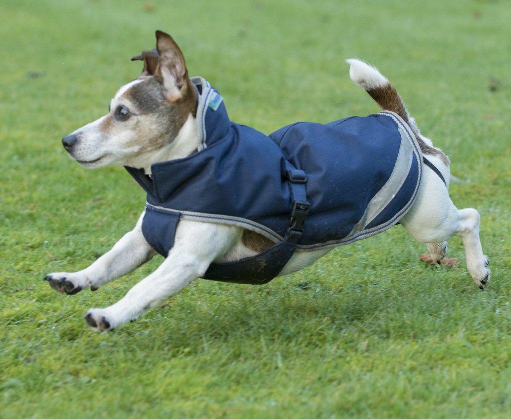 Bucas Freedom 50g Dog Jacket 55cm Navy Silver