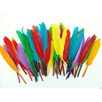Assorted Coloured Quill Feathers - Art Crafts Collage Fly Fishing Dress Up Hats