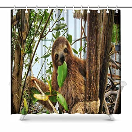 interestprint sonriente bebé marrón Throated Three Toed Sloth en el ...