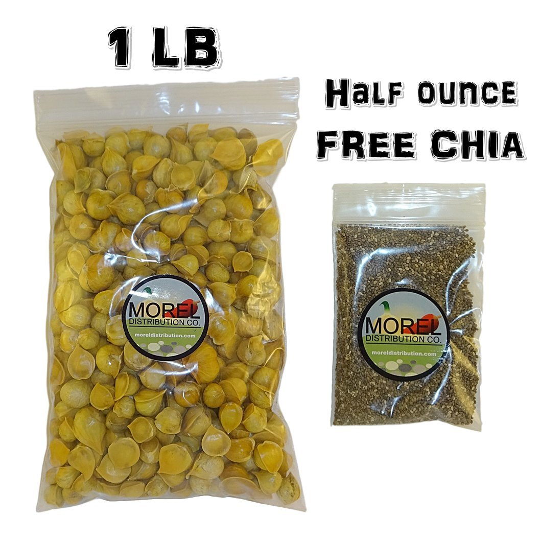 Japanese Garlic (Ajo Japones) 1 Lb with 1 oz FREE CHIA BAG (1) by Morel Distribution Company