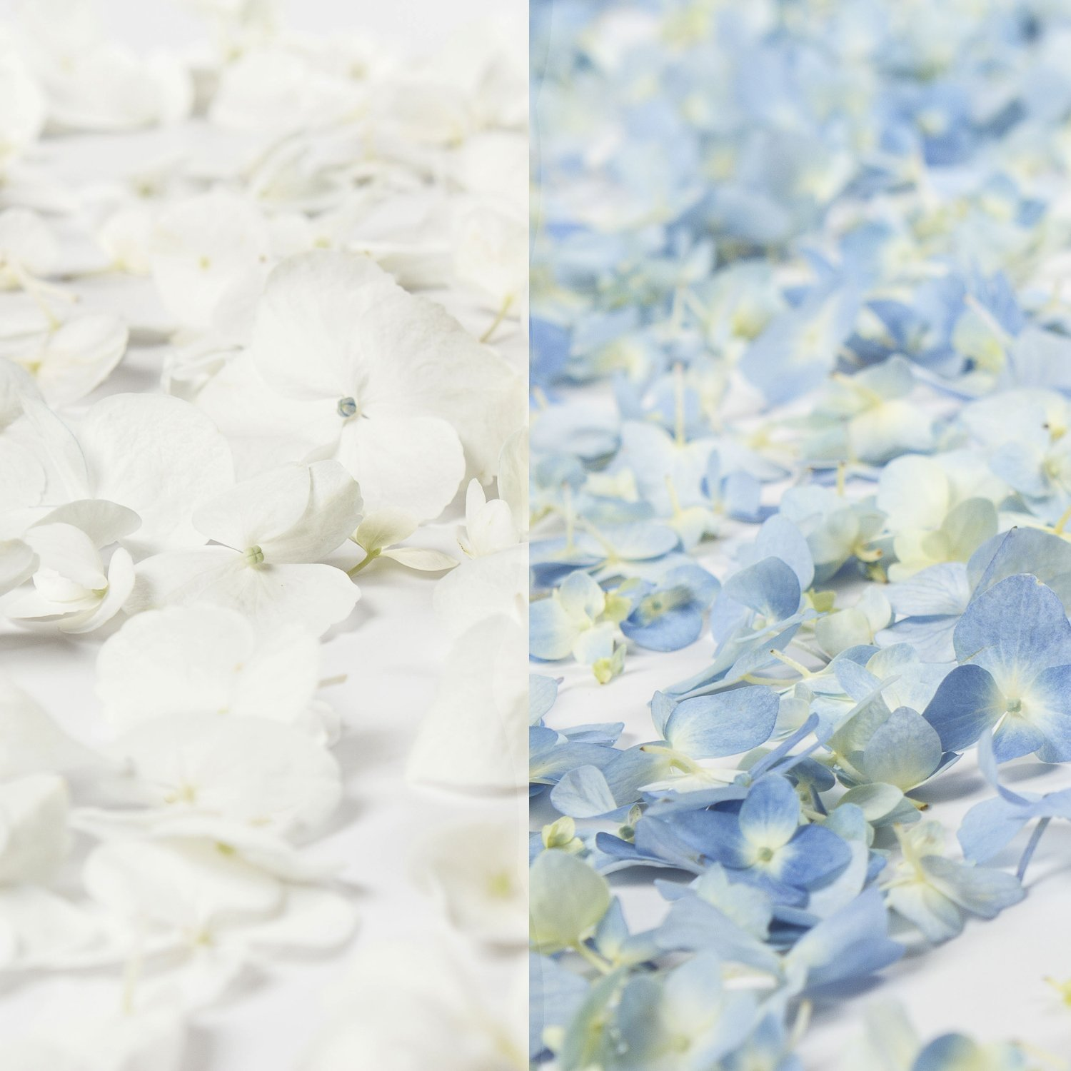 Farm Fresh Natural 1/2 white 1/2 blue Hydrangea Petals - 16 PK.