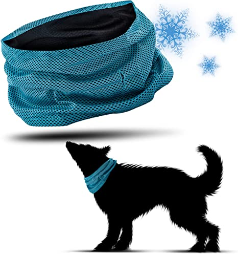 PamperPets - Collar refrigerante para Perros: Amazon.es: Productos ...