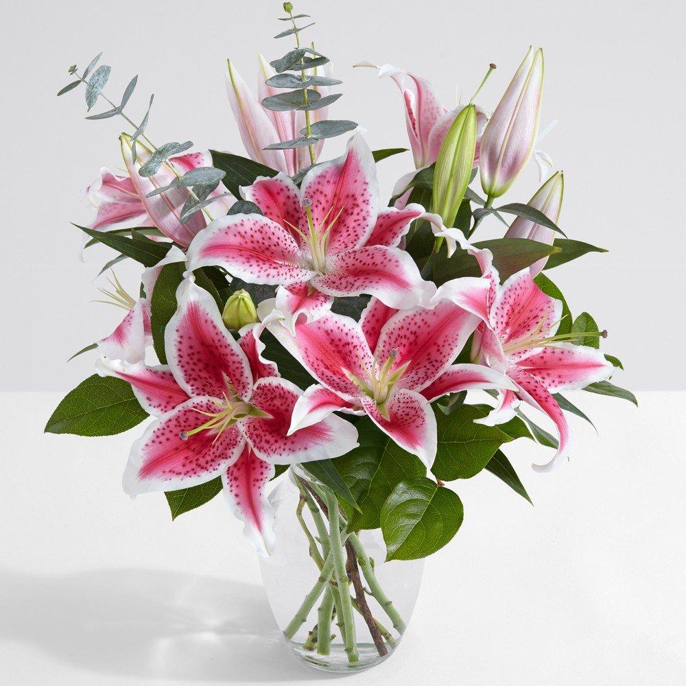 Amazon Proflowers 10 Count Pink Fragrant Stargazer Lilies