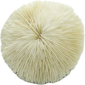 "Mushroom Sea Coral | White Real Mushroom Coral 3""-4"" (1 Piece) | Aquarium Ornament for Decoration | Plus Free Nautical eBook by Joseph Rains"