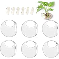 6-Pack Wall Hanging Planters Glass Terrariums - Round Air Plants Wall Containers Succulents Globe Orbs (4.7 x 4.7 Inches)