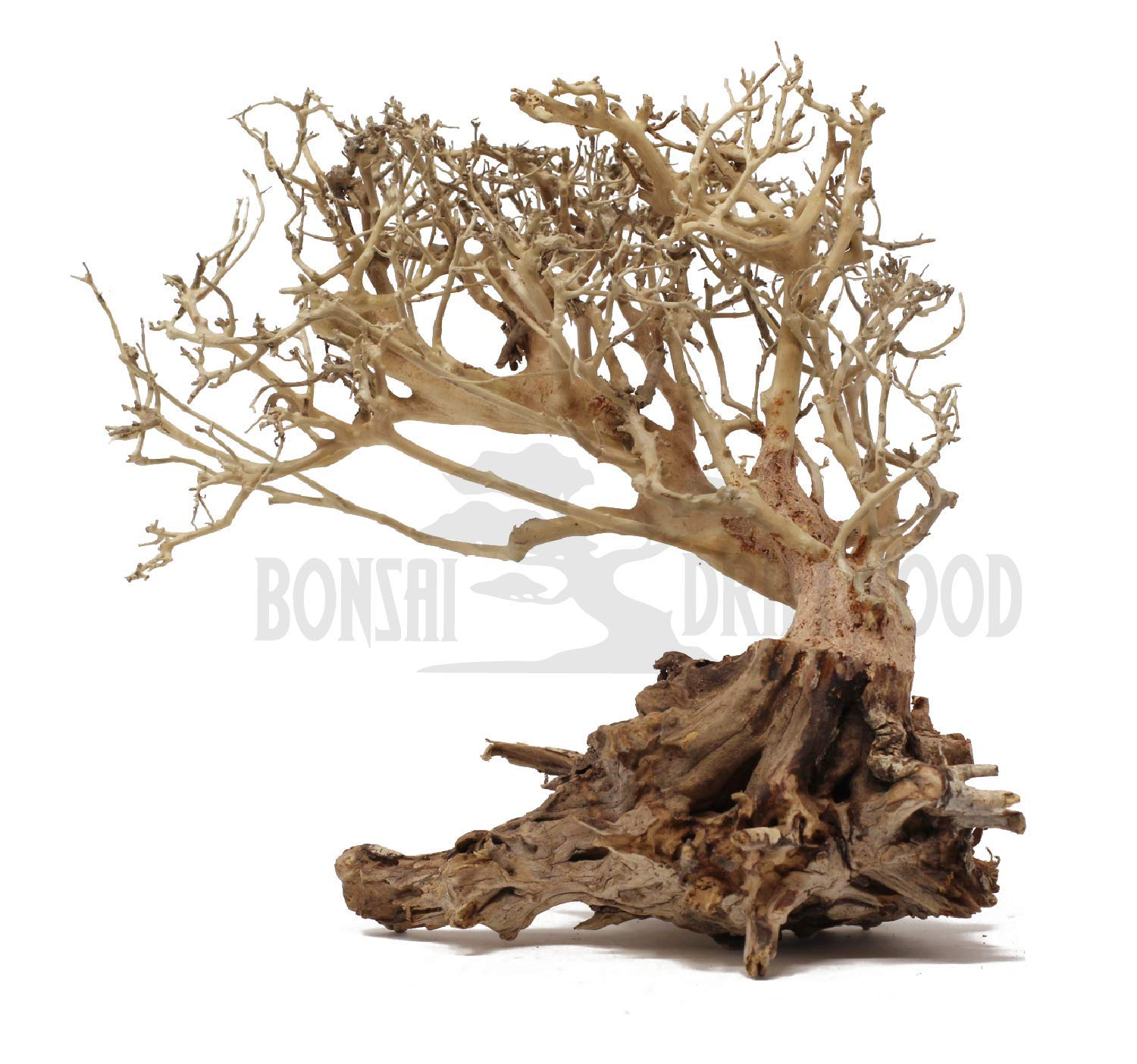 Bonsai Driftwood Aquarium Tree on Rock (8 Inch) Natural, Handcrafted Fish Tank Decoration | Helps Balance Water pH Levels, Stabilizes Environments | Easy to Install by Bonsai Driftwood