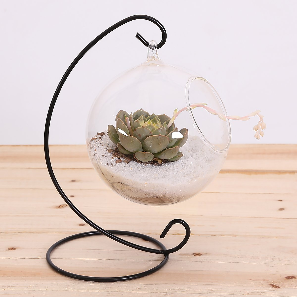 10L0L Charming Clear Hanging Glass Ball Vase Air Plant Terrarium Kit/Succulent Flowerpot Container w/Black Metal Stand (Big) by 10L0L