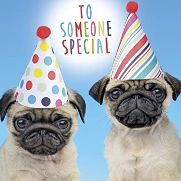 Pugs in Party Hats Birthday Card  To Someone Special   Amazon.co.uk ... c5aac122acd