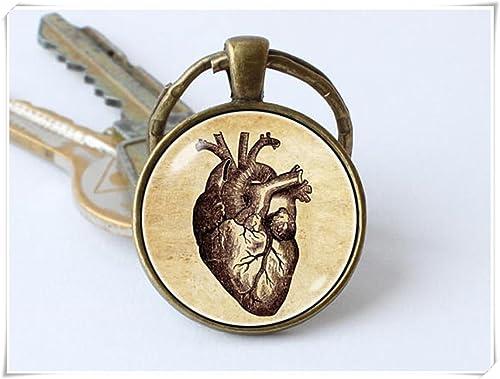 Amazon.com: cutetrex joyas corazón humano llavero anatomía ...