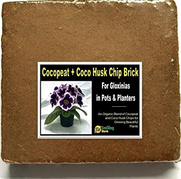 Amazon Smiling Worm Coir Brick Twin Pack For Gloxinia Plant