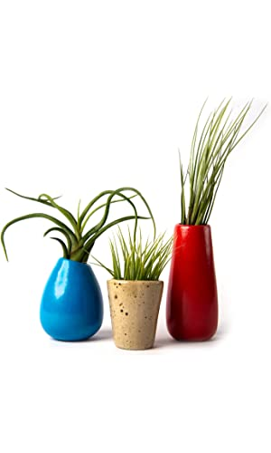 Hinterland Trading Small Ceramic Vase Set with Air Plants