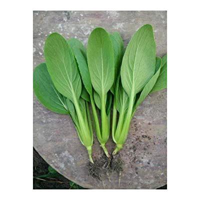 Feather Pak Choy All Year Round Little Bok Choi Petiole 3000 Seeds Heirloom Vegetable Bulk for Planting 鸡毛菜种子 : Garden & Outdoor