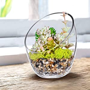 "KNIKGLASS Clear Slant Cut Bubble Bowl, Fish Bowl & Plant Terrarium, Candy Jar Slant Cut Globe Vase Center Piece, Round Flower Vase, (6.9"" Tall .5.5"" Wide) …"