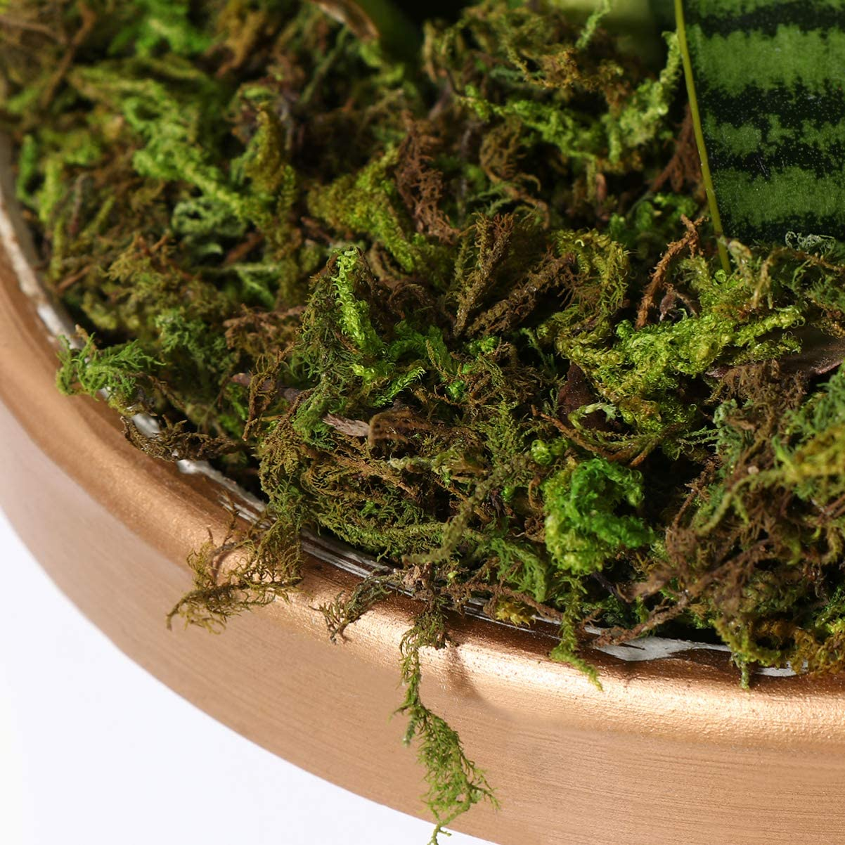 Dark Green BESPORTBLE 2 Packs Artificial Moss Simulation Fake Green Plants Flowerpot Micro Landscape Decoration for Home Garden Patio Fairy Gardens Terrariums Accessories