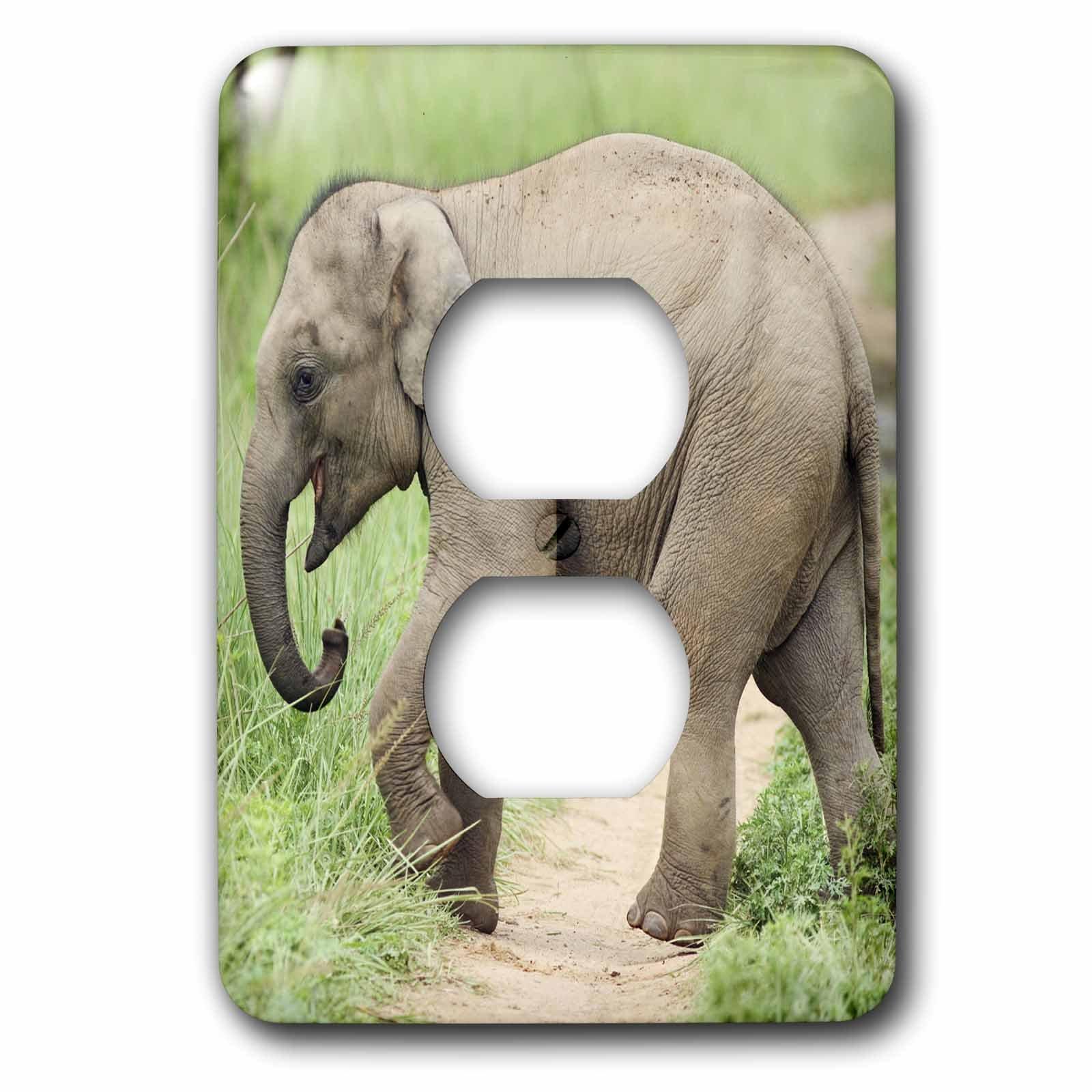 3dRose lsp_71687_6 Baby Elephant, Mother, Corbett National Park, India-As10 Jra0424 Jagdeep Rajput 2 Plug Outlet Cover