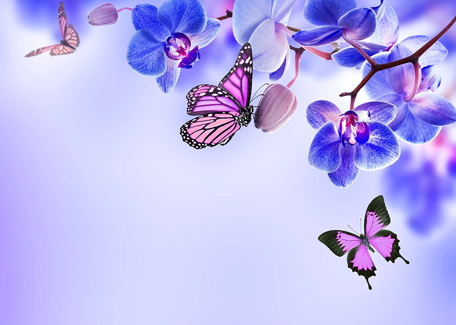 Fuermor Background 75 Ft Butterflies And Blue Flowers Lidia Butterfly Photography Backdrop Photo Props Room Mural Rq036 Camera