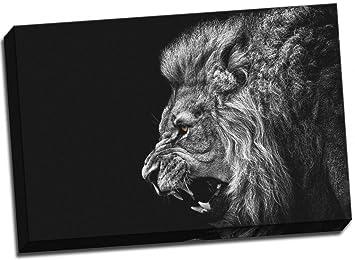 Blanco y Negro León lienzo rugiendo impresión grande 30 x 50,8 cm A1: Amazon.es: Hogar