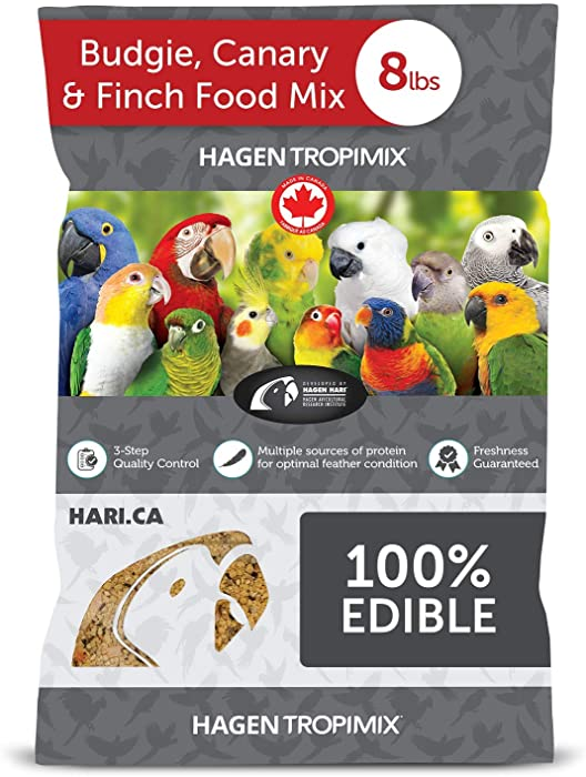 The Best Budgie Finch Food