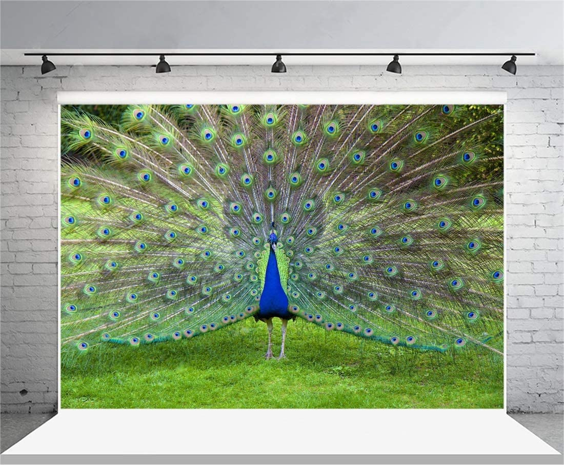 Yeele 10x8ft Photography Background Beautiful Peacock Show Off Common Peafowl Expanded Feathers Out Kid Baby Girl Child Artistic Portrait Studio Props Video Drape Photo Backdrop Wallpaper