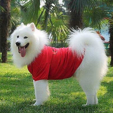 Elvoo Perro Chihuahua Yorkshire Sudadera con capucha Ropa ...