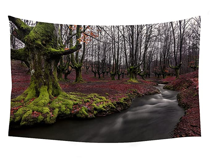 Amazon.com: Alava Bizkaia forest water autumn trees t - Wall ...