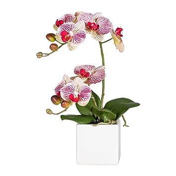 Wohnfuehlidee Kunstpflanze Phalenopsis (Orchidee), 2 Rispen, Farbe Creme Rot,  Im