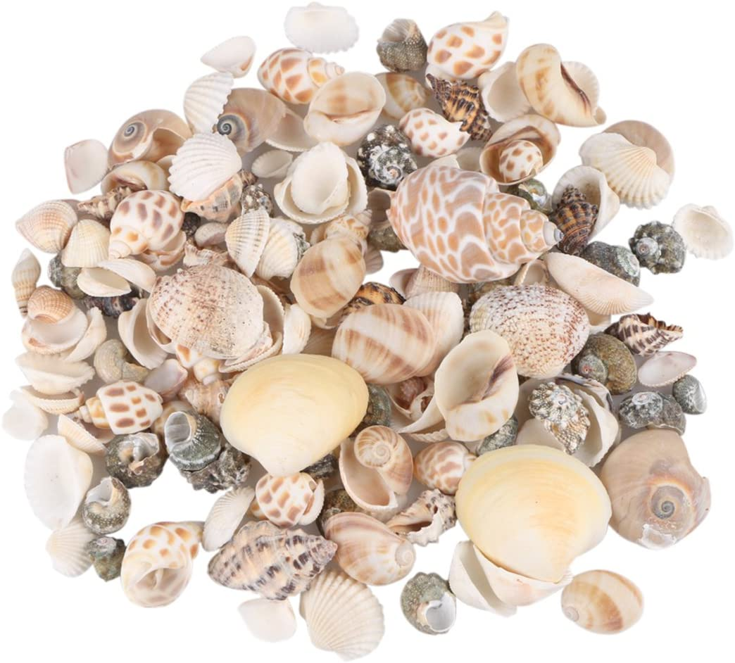 Aunifun 80PCS Sea Shells Mixed Beach Seashells, Colorful Natural Seashells Perfect Accents for Candle Making,Home Decorations, Beach Theme Party Wedding Decor, DIY Crafts, Fish Tank and Vase Fillers