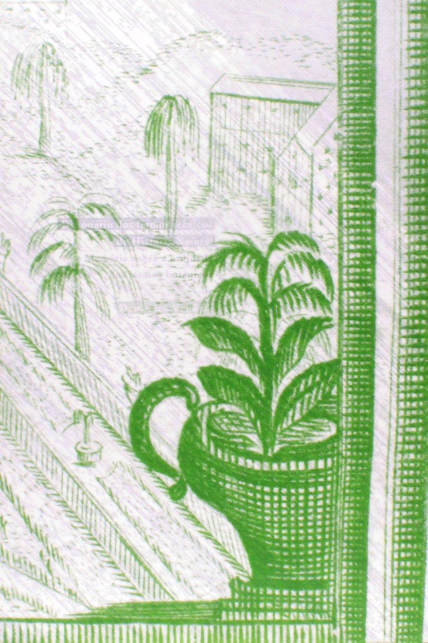 Coleção O Gabinete das Curiosidades: Manuel A. Camara: 9788586488306: Amazon.com: Books