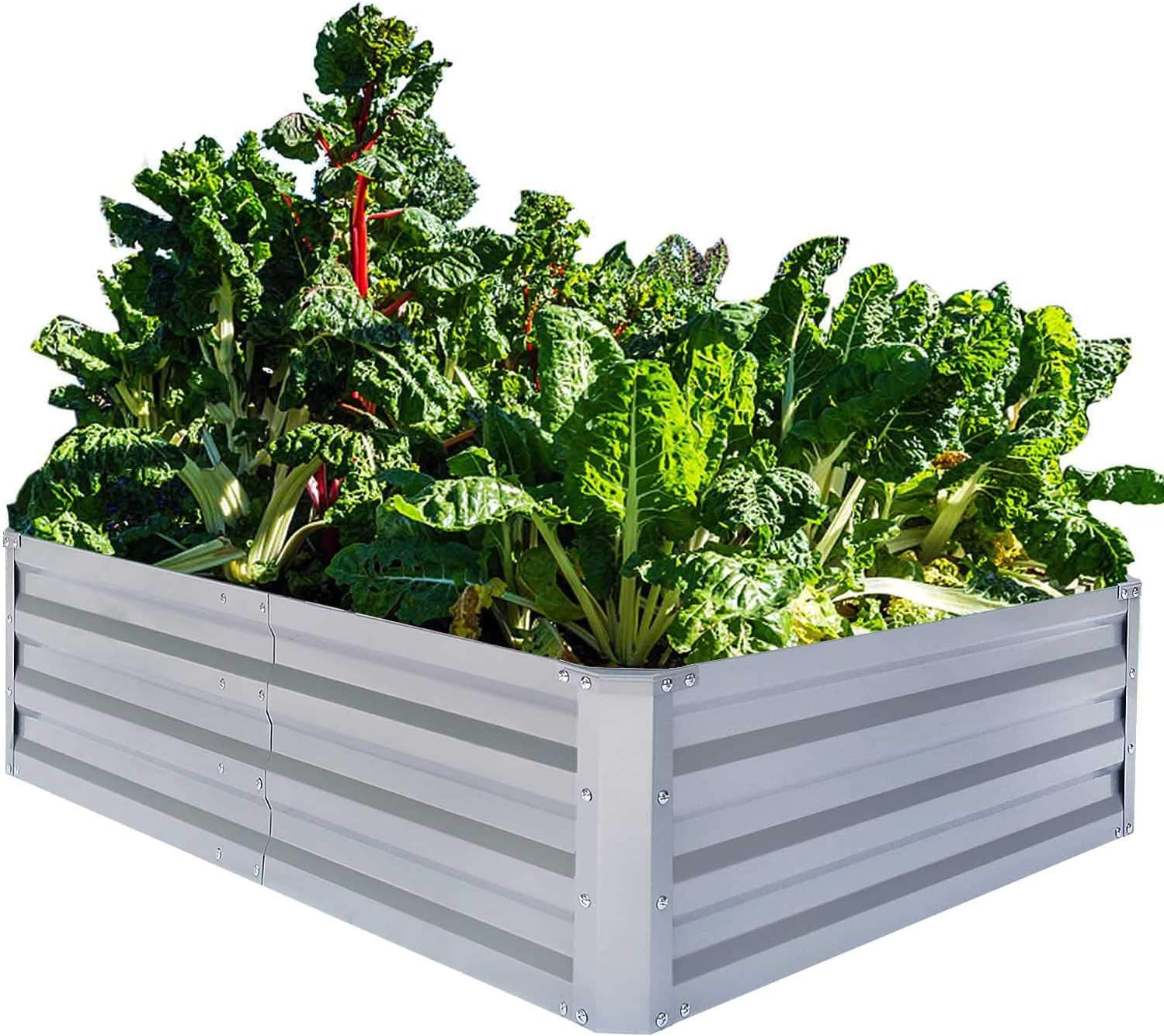 Galvanized raised garden bed for vegetables that grow well together