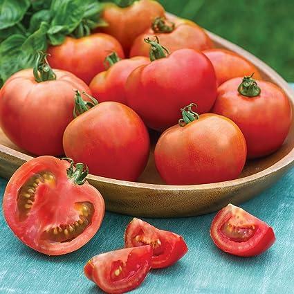 2 1//2 Pot Burpee Bush Early Girl Hybrid Tomato 3 Live Plants
