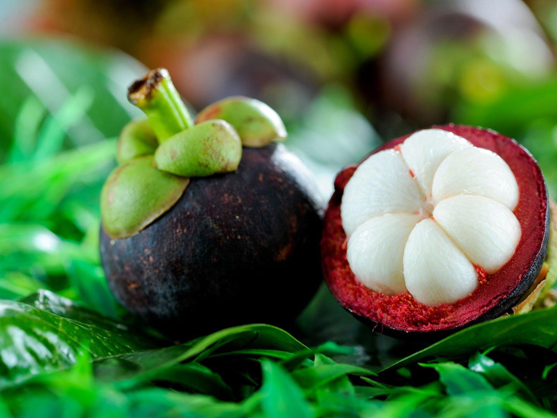CATTERPILLAR FARM Rare Exotic Tropical Fruit Mangosteen Garcinia ...