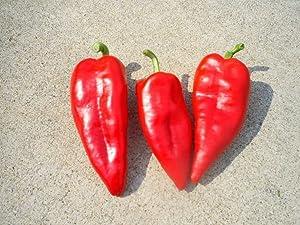 10 SZEGEDI GIANT Seeds ,Sweet Hungarian Paprika/Pepper Seeds sweet; Blocky Type