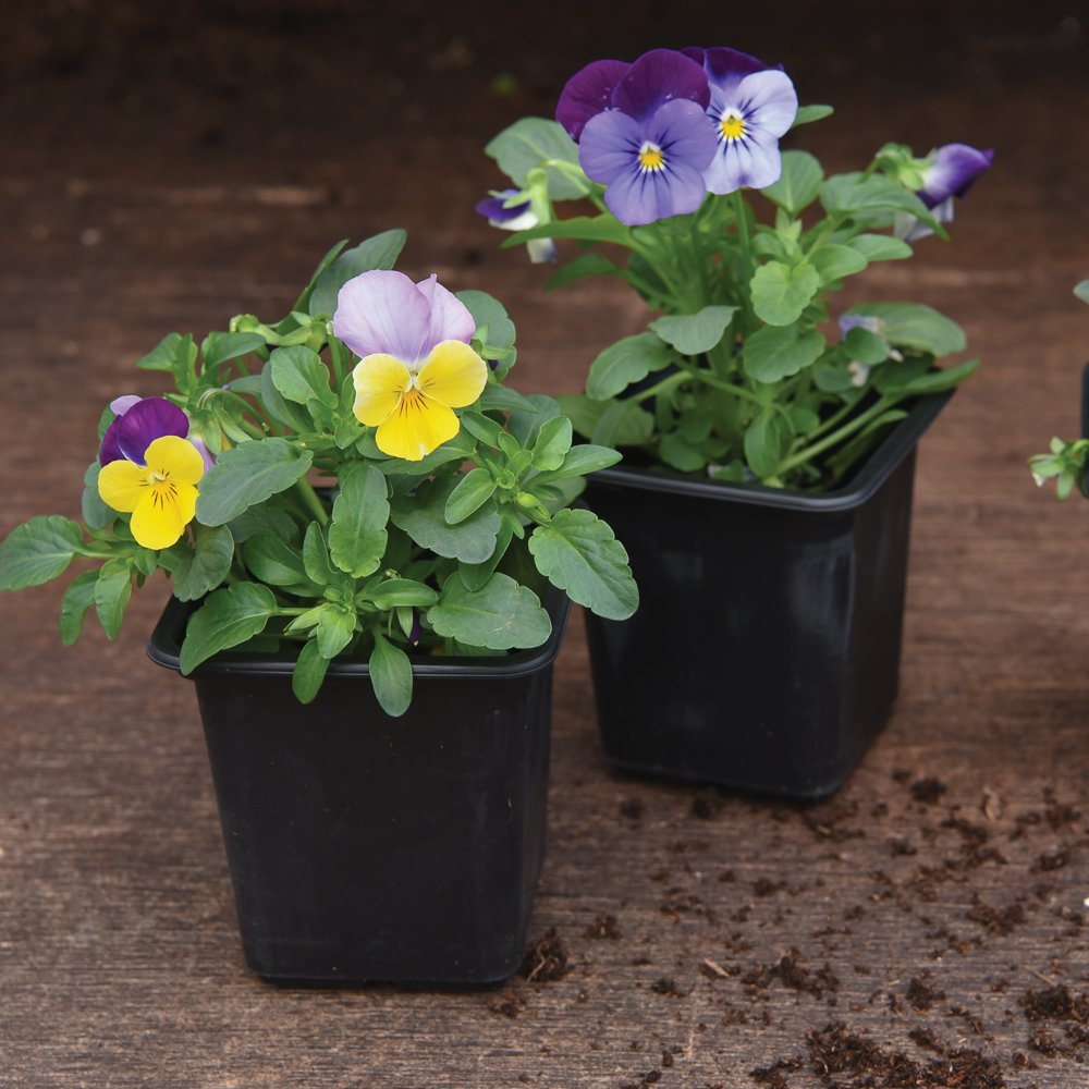 Thompson & Morgan Black Plastic Seed Starter Plant Pots Perfect Seedlings, Cuttings & Use in Greenhouse 7x8cm Plastic Pots x 30