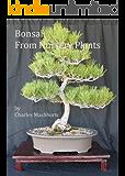 Bonsai From Nursery Plants