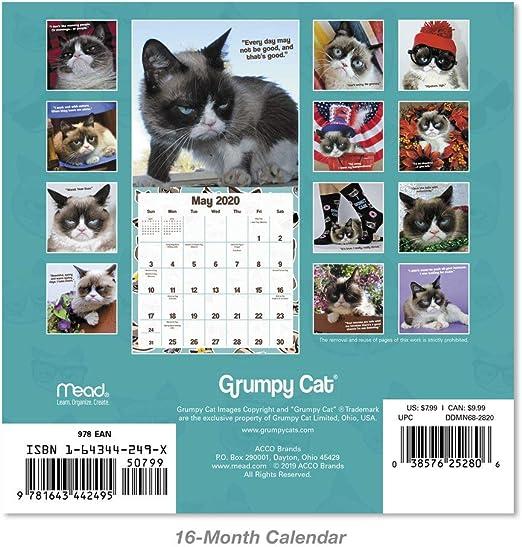 Mini Calendar DDMN682820 2020 Grumpy Cat Wall Calendar