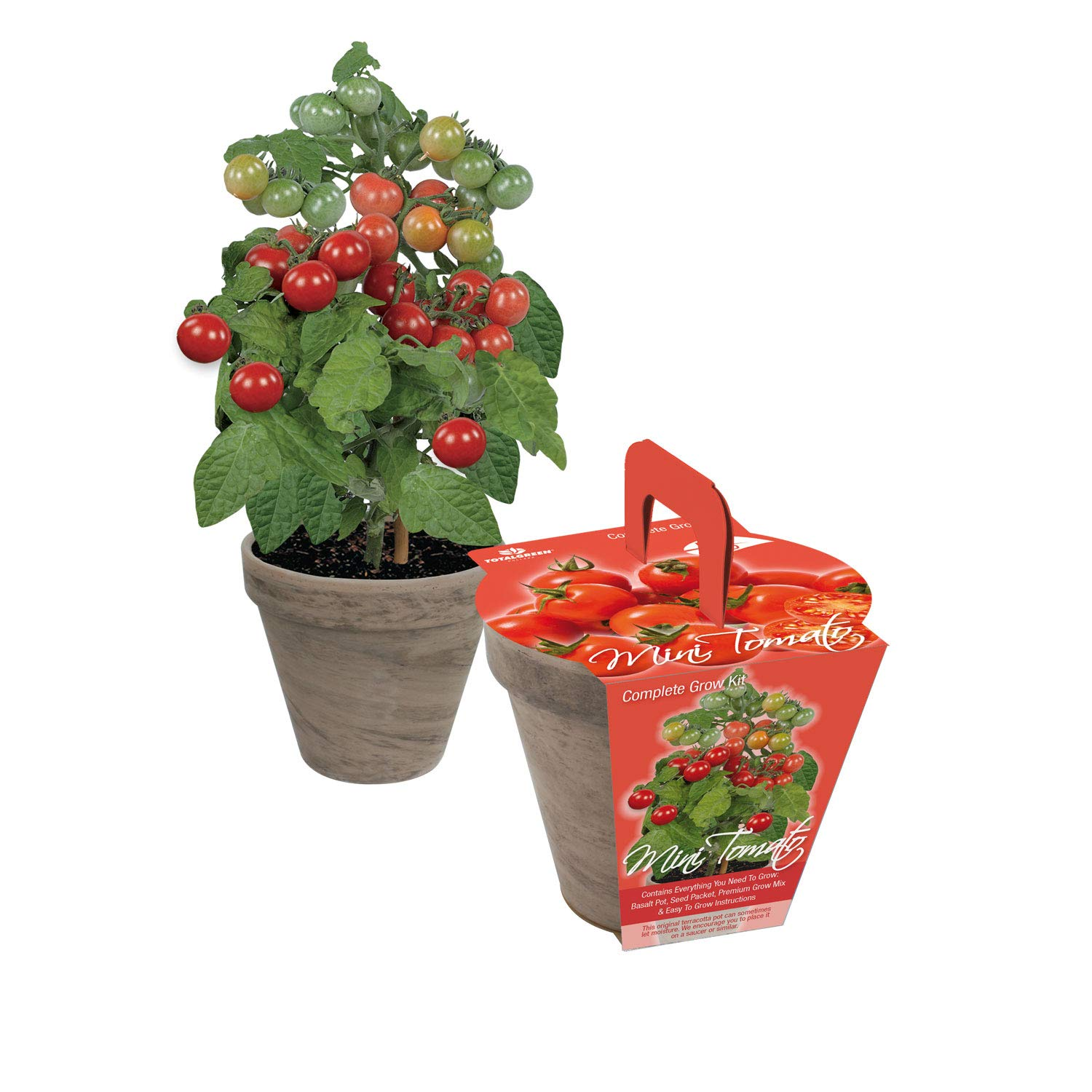 TotalGreen Holland Special Mini Tomato Grow Kit | Grow Fresh Mini Tomato Seeds Indoors | Great Gift Item | Grow Your Own Mini Tomato Plants in Unique Basalt Pot | Exclusive Kit by TotalGreen Holland by TotalGreen Holland (Image #4)