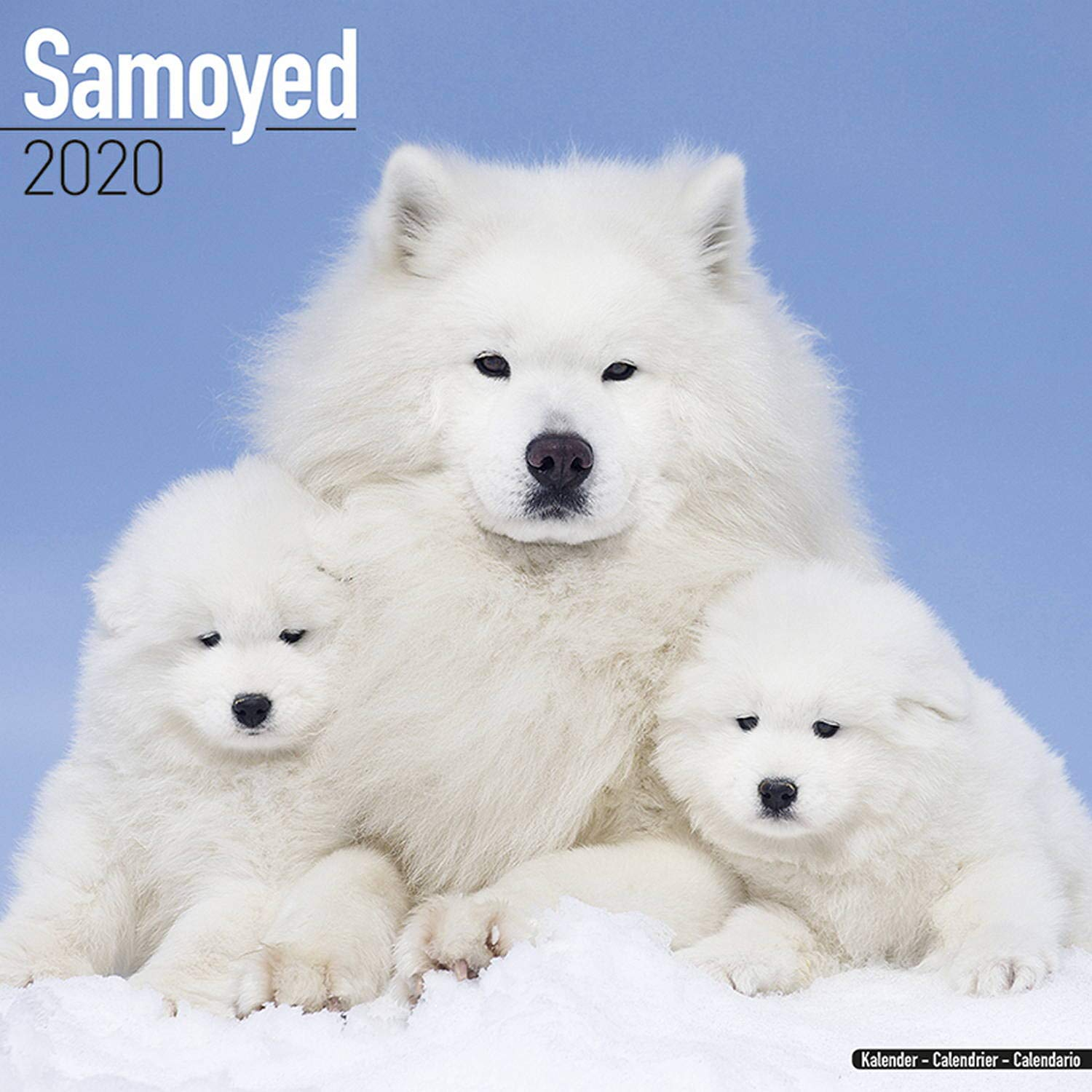 Wrc 2020 Calendario.Samoyed Calendar 2020 Amazon Co Uk Avonside Publishing Ltd