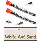 Nature Gift Store Ant Farms Sand Refill Plus 50 Live Ants (2 Tubes of Ants) for Ant Habitats, 10oz Sand