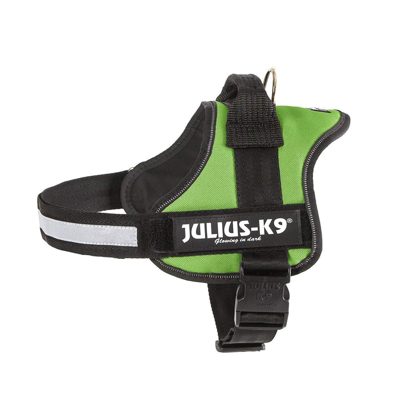 Arnés Julius-K9 Verde - Mediano: Amazon.es: Productos para mascotas