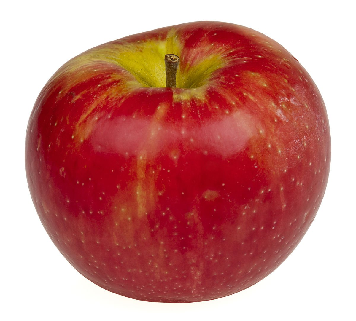 Honeycrisp Apple Tree - Healthy - Established - Trade Gallon Potted - 1 Plant by Growers Solution