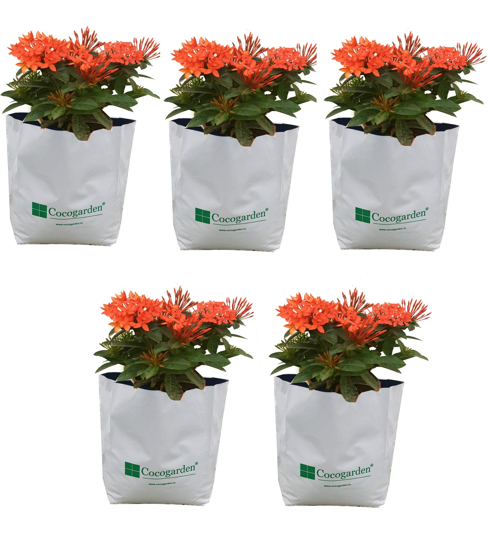 Cocogarden Large Size Poly Growbags Uv Stabilized 5 Qty [28Cms(L)X28Cms(W)X48Cms(H)(Pack of 5),White product image