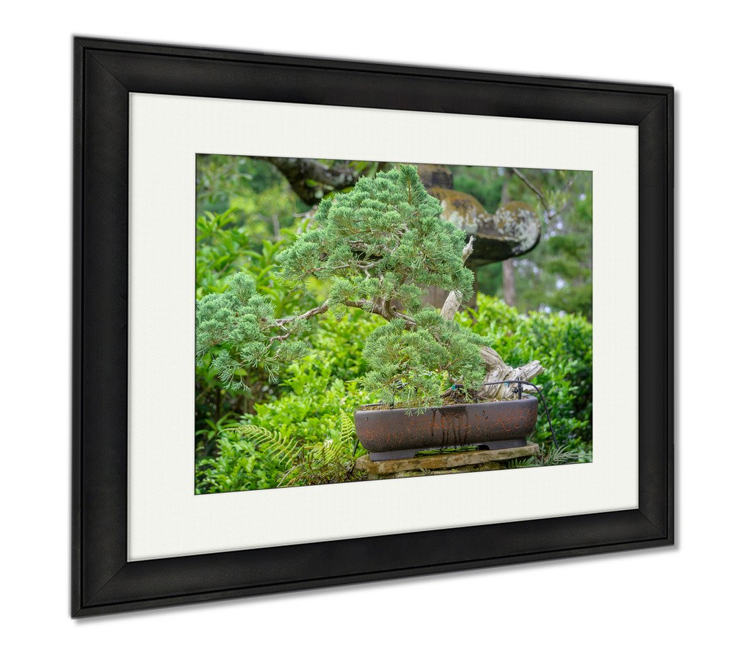 Ashley Framed Prints Bonsai Tree In The Middle Of Exotic Garden In Tampa Florida, Modern Room Accent Piece, Color, 34x40 (frame size), Black Frame, AG6547054
