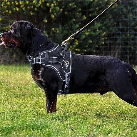 LOSY PET Arnés para Perro, arnés Ajustable para Mascotas, Chaleco ...