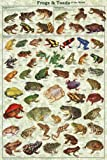 Frogs & Toads of the World Educational Poster 24 x 36in