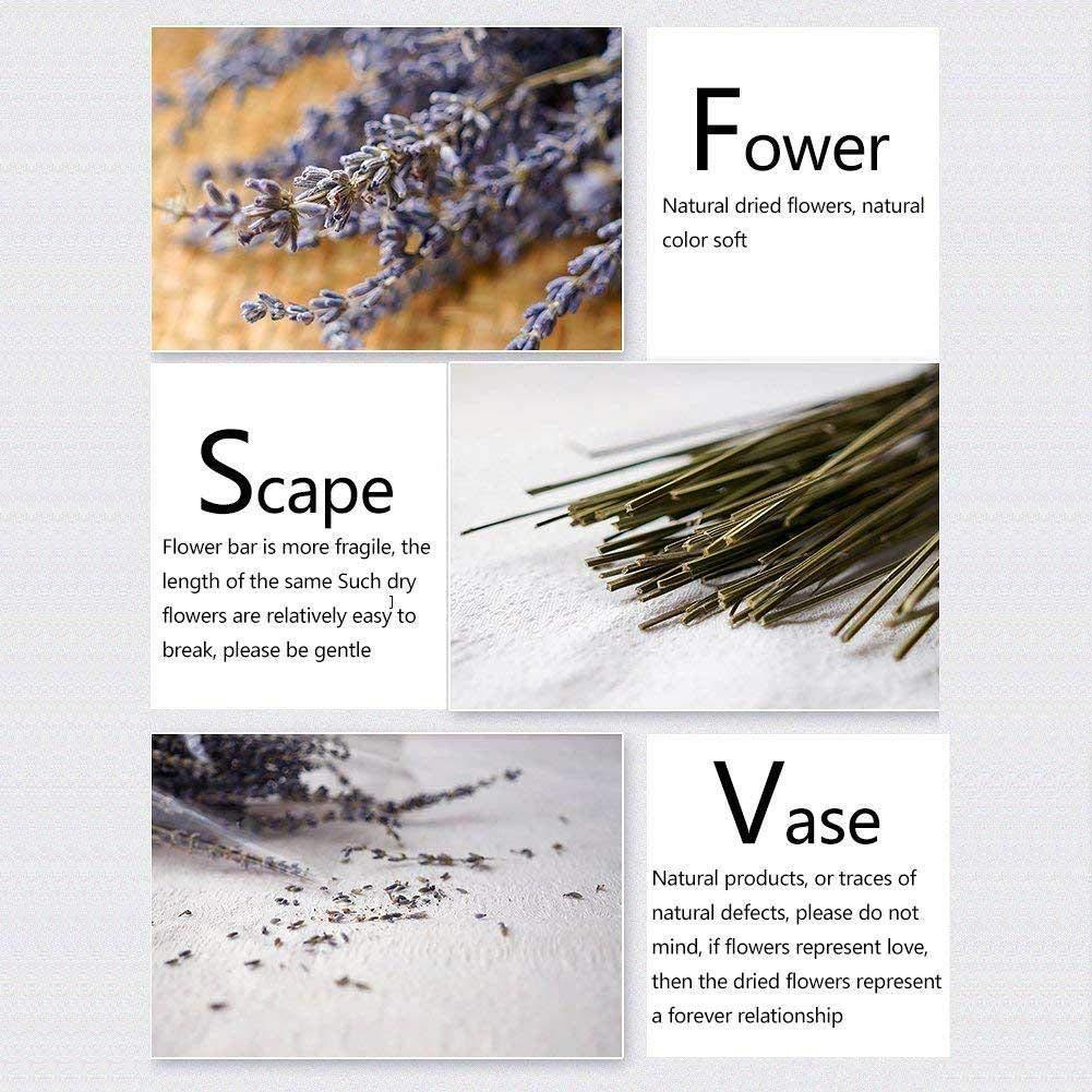 Lavande S/éch/ée Ultra Bleu Faisceaux Bouquet de fleurs s/éch/ées naturelles pour la D/écoration Int/érieure Lartisanat Cadeau Mariage ou Toute