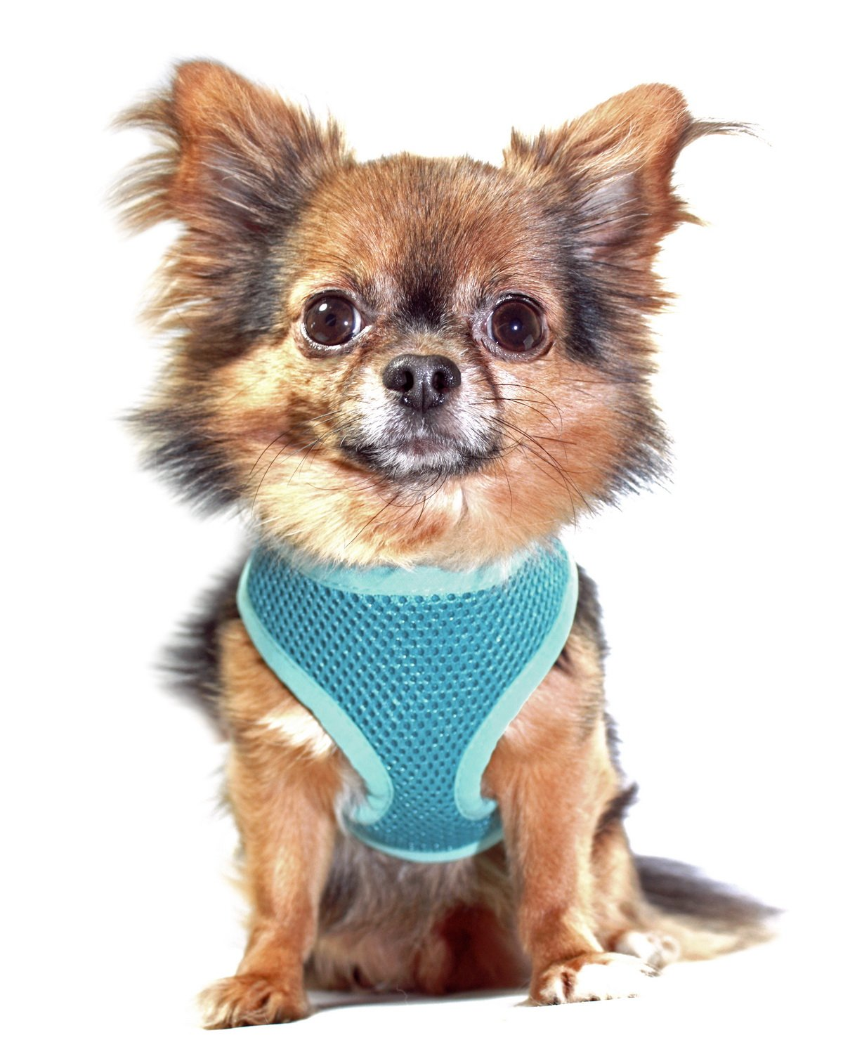 Anit Accessories Basic Mesh Harness, X-Large, Turquoise
