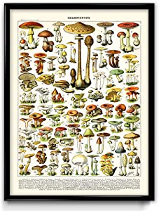 Mushroom Illustration Vintage Print 1 - Mushroom Poster - Mushroom Art - Home Decor - Home Art - Kitchen Art - Botanical Science - Larousse (16W x 20T)