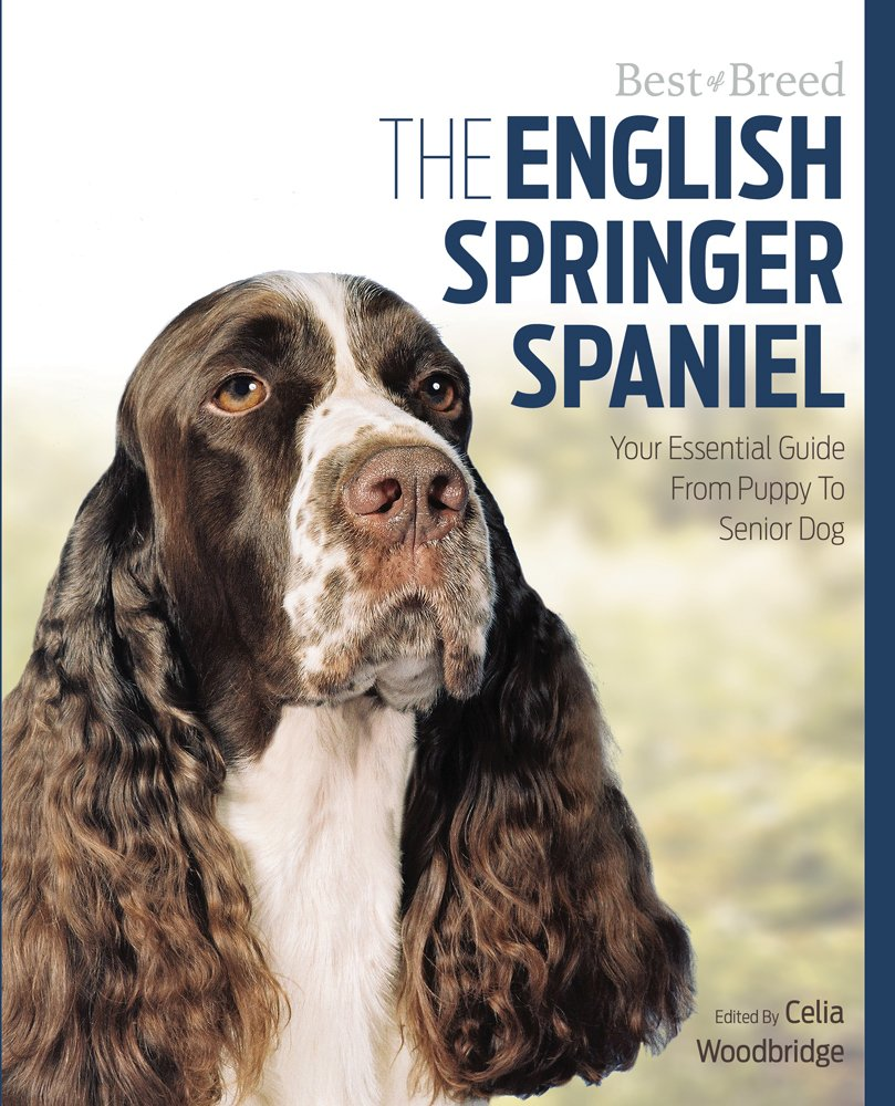 The English Springer Spaniel Your Essential Guide From Puppy To